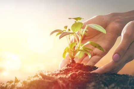 Konzept der Erzeugung und Entwicklung. Person hält in den Händen grünen Sprössling. Frühling, Natur, Öko und Pflege. Standard-Bild