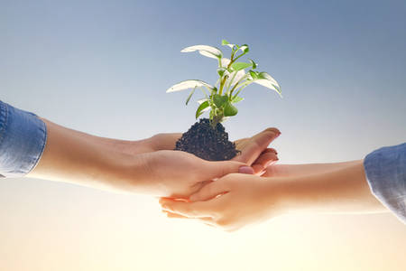 Concept of generation and development. Adult and child are holding in hands green sprout. Spring, nature, eco and care.