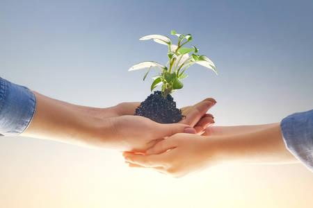 Konzept der Erzeugung und Entwicklung. Erwachsener und Kind halten im Handgrünen Sprössling. Frühling, Natur, Öko und Pflege.