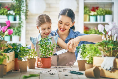 Cute child girl helping her mother to care for plants. Mom and her daughter engaging in gardening near window at home. Happy family in spring day.
