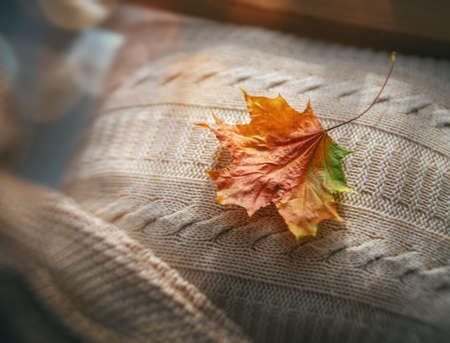 Autumn maple leaf on knitted things. Top view