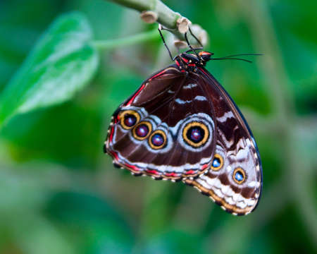 Butterfly Profile hanging from branch Фото со стока