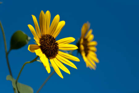 Twin flowers against the sky - horizontal