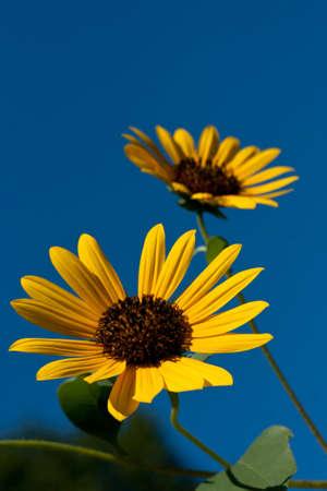 Twin flowers against the sky Фото со стока