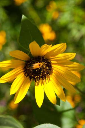 Hiding in plain sight - beetle in camouflage Фото со стока - 7765998