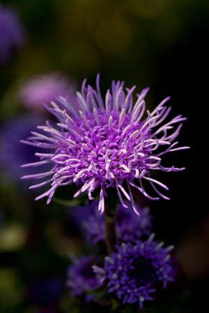 Delicate purple wildflower with wavy petals