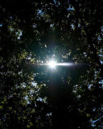 木 々の間から光
