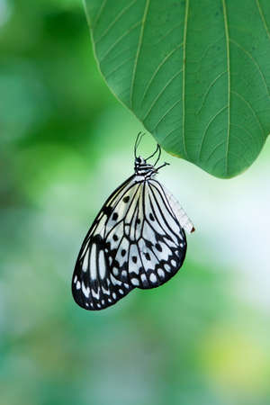 butterfly with thin depth of focus