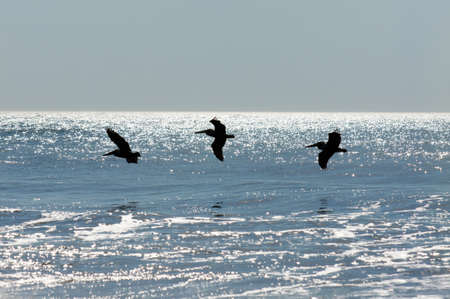 Birds flying in formation over the waves