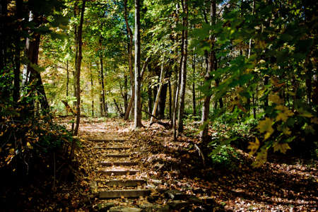 Wooden steps up from stream bed