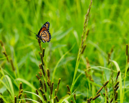 Meadow grass with single butterfly
