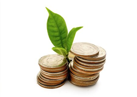 growing from coin Stock Photo