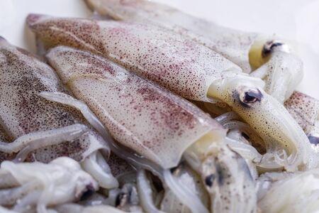 Calamares frescos en plato: ingrediente de mariscos.