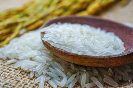 Jasmine white rice with gold grain from agriculture farm. Stok Fotoğraf