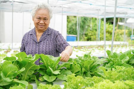 Asian senior lady holding green and red oak vegetable salad hygienic organic plant hydroponic cultivation tree garden farm : healthy food concept. Banque d'images