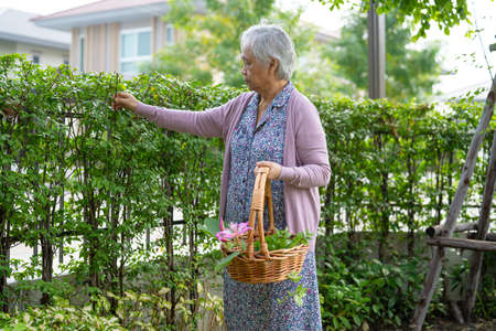 Asian senior or elderly old lady woman taking care of the garden in house, hobby to relax and exercising with happy. 免版税图像