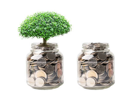 Tree on save money coins in grass jar, Business finance investment concept.