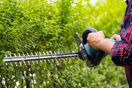 Gardener holding electric hedge trimmer to cut the treetop in garden. 免版税图像