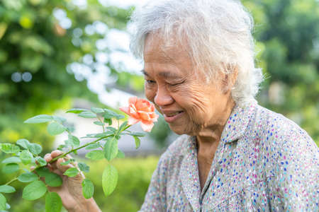 Asian senior or elderly old lady woman with pinkish orange rose flower in the sunny garden. Фото со стока