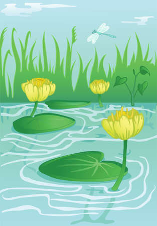 nenuphar: blooming yellow water-lilies in calm water flow