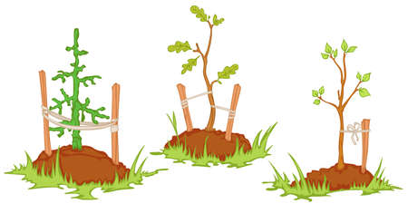 soil: young trees planted in the soil. isolated objects