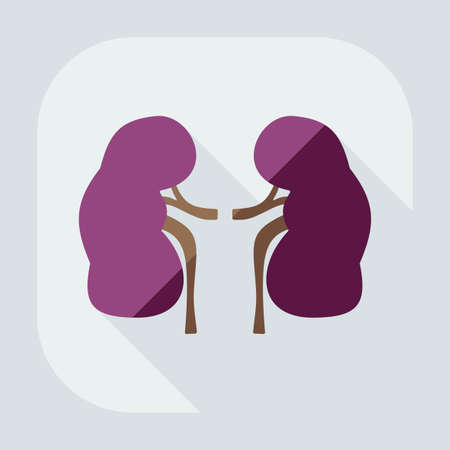 nephrology: Flat modern design with shadow icons kidneys Illustration