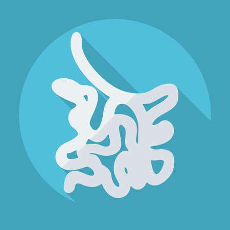 Flat modern design with shadow icons small intestine Vector