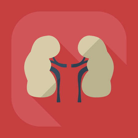 Flat modern design with shadow icons kidneys Illustration