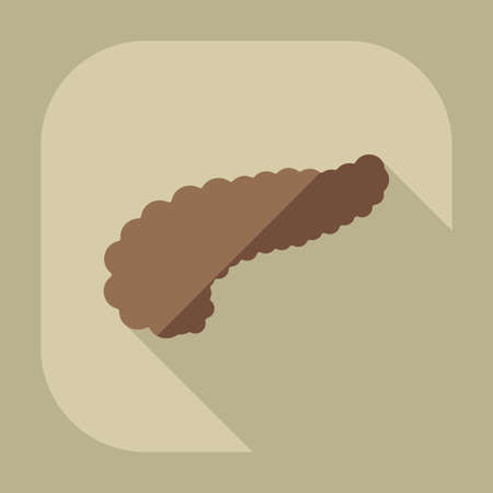 pancreas: Flat modern design with shadow icons pancreas