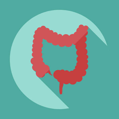 descending colon: Flat modern design with shadow icons large intestine
