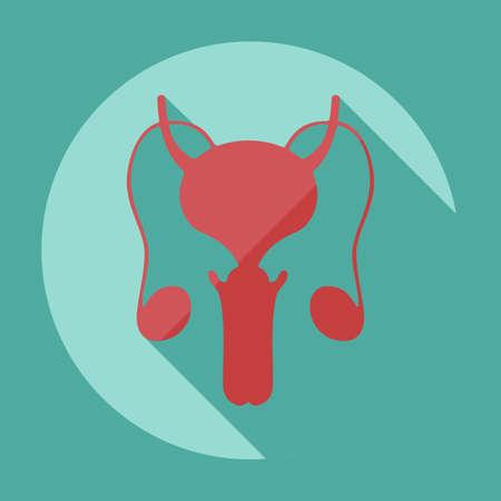 apparato riproduttore: Design moderno piatto con ombra icone sistema riproduttivo maschile
