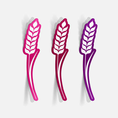 wheat isolated: Realistic paper sticker: Ears of wheat. Isolated illustration icon Illustration