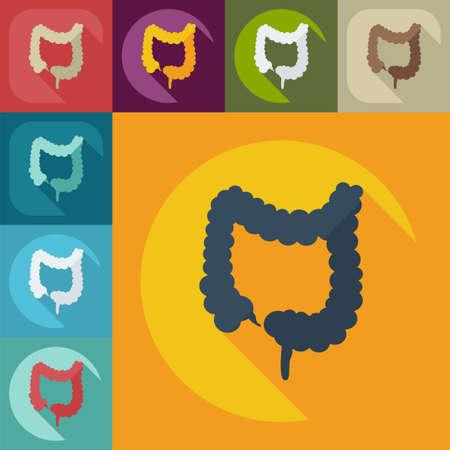 intestino grueso: Dise�o moderno plana con sombra iconos intestino grueso Vectores