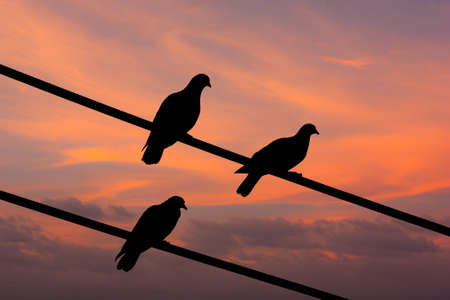 Silhouette view of pigeons under twilight sky photo