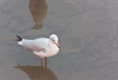 foreshore: Seagull on the foreshore area