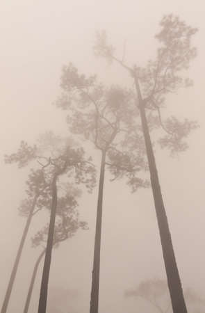 Trees and the misty scene in Thailand photo