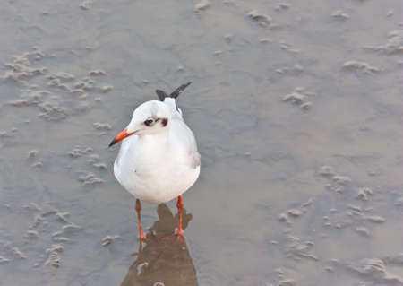 foreshore: Seagull on foreshore area in Thailand