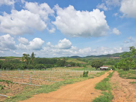 damping: Agriculture field in northern of Thailand
