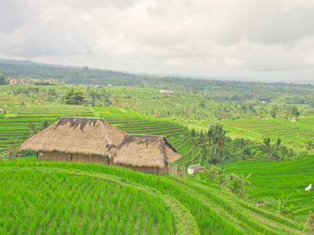 granary: Agricultural site at Jatiluwih rice terraces, Bali, Indonesia