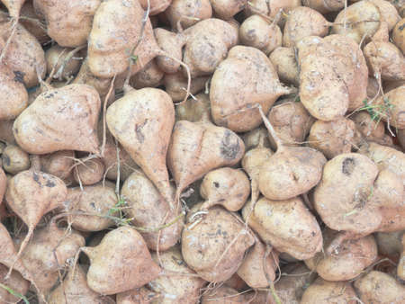 Stow of raw yam bean