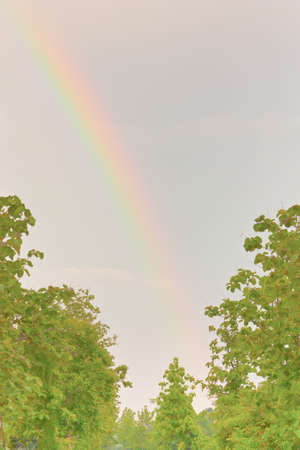 occur: View of rainbow over trees top