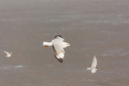 foreshore: Flying seagulls over mud foreshore area