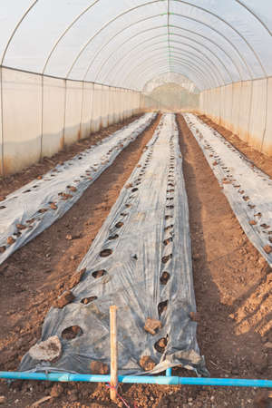 and plot: Greenhouse prepared plot ready for plantation
