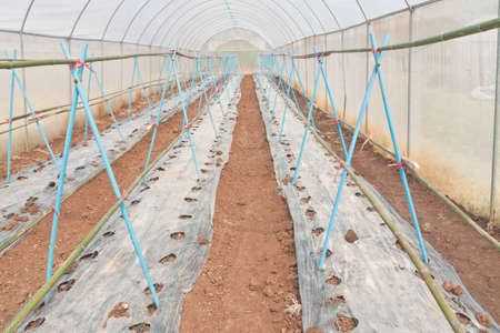 aligned: Greenhouse prepared plot ready for plantation - horizontal aligned