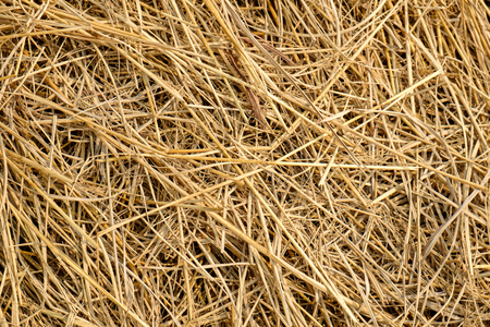 chaff: Straw is an agricultural byproduct the dry stalks of cereal plants after the grain and chaff have been removed.