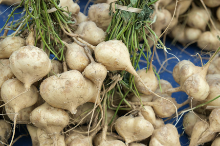 bean family: yam bean is a species in the genus Pachyrhizus in the bean family. Stock Photo