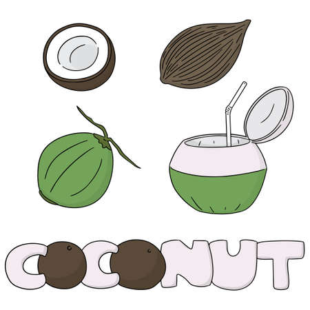 coconuts: vector set of coconut Illustration