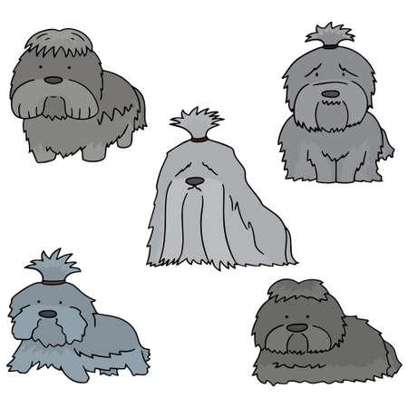 shih tzu: vector set of dog, shih tzu Illustration
