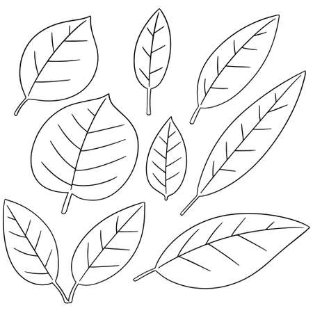 vector set of leaves on white background.