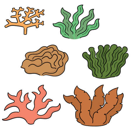 vector set of coral and seaweed Illustration